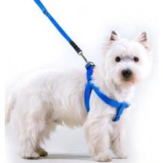 Шлейка с поводком Collar Dog Extreme