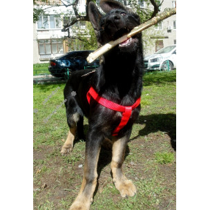 Шлейка Collar Dog Extreme Red 60-90 см