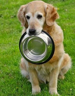 металлические миски для собак