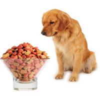 Витамины для собак всех пород