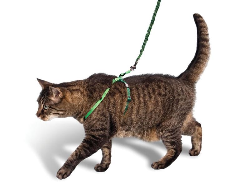Купит шлейку для кота
