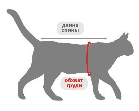схема измерения кошки одежда