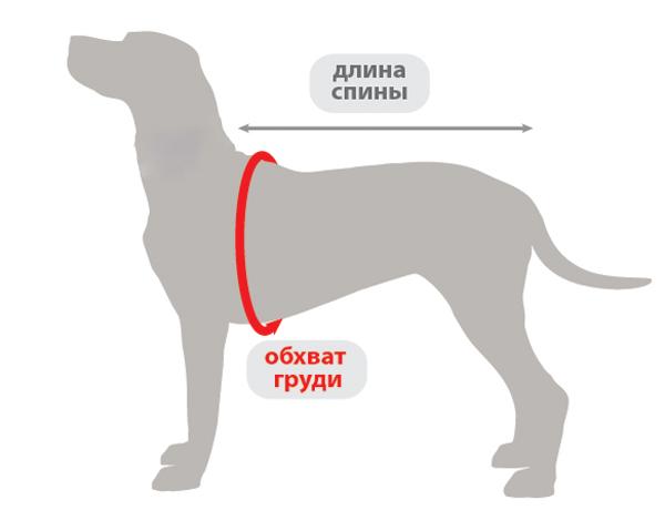 схема измерения собаки одежда