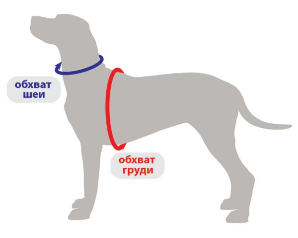измерение собаки шлейки