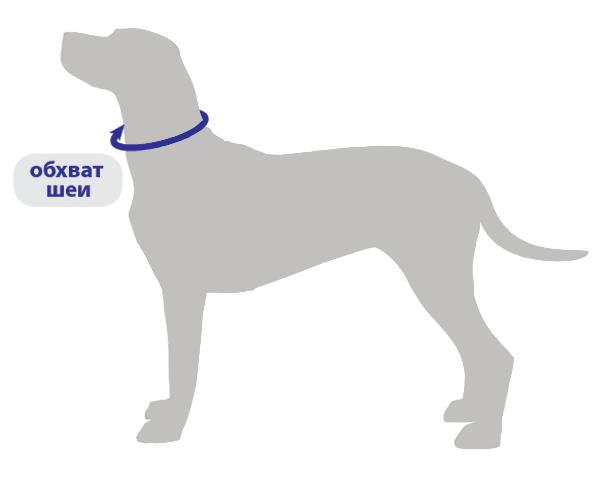 схема измерения собаки ошейники
