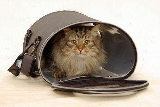 перевозка для кошек