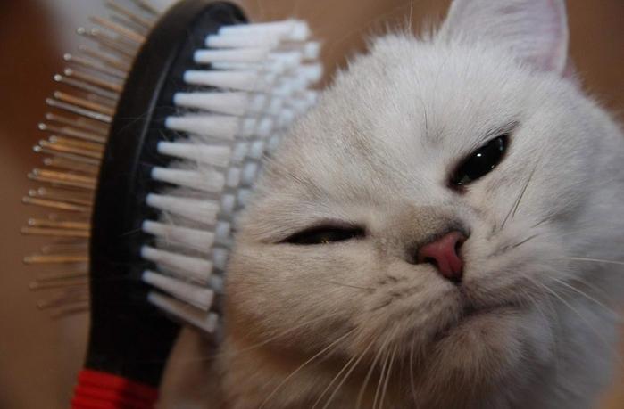 щетки для кошек