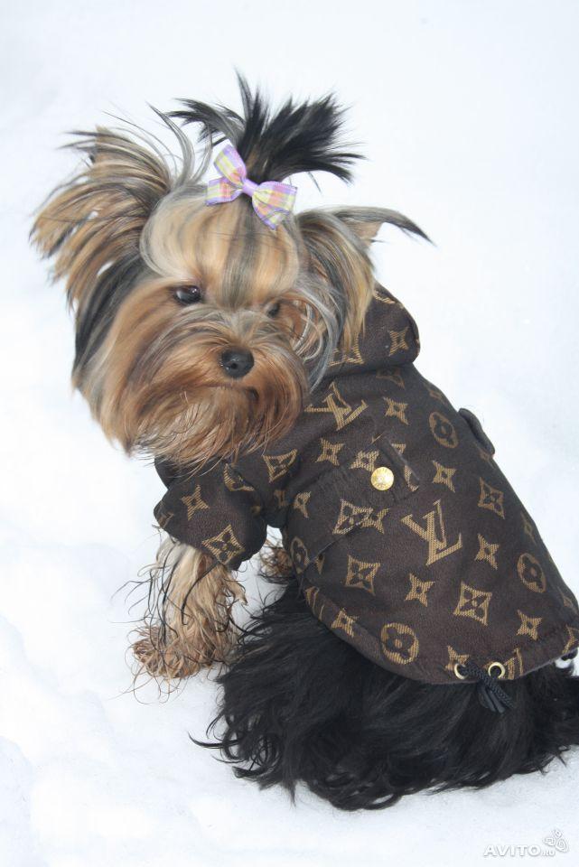 премиум одежда для собак