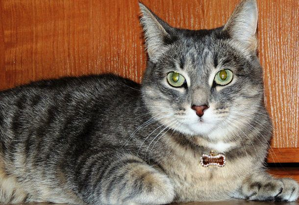 адресники для кошек