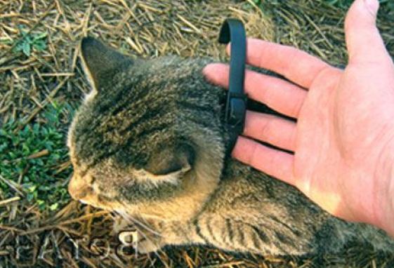 ошейники для кошек от блох и клещей