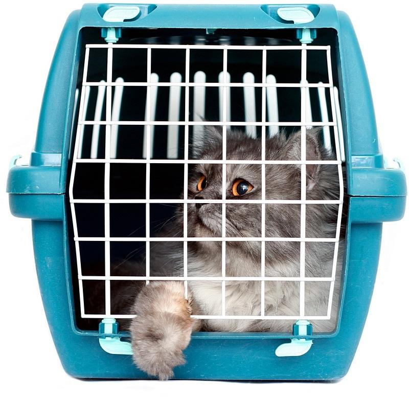 контейнеры-переноски для кошек