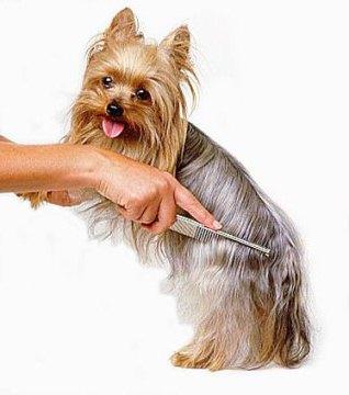 щетки для собак