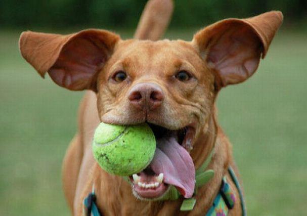 игрушки для больших собак