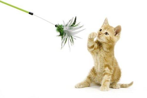 дразнилки для кошек