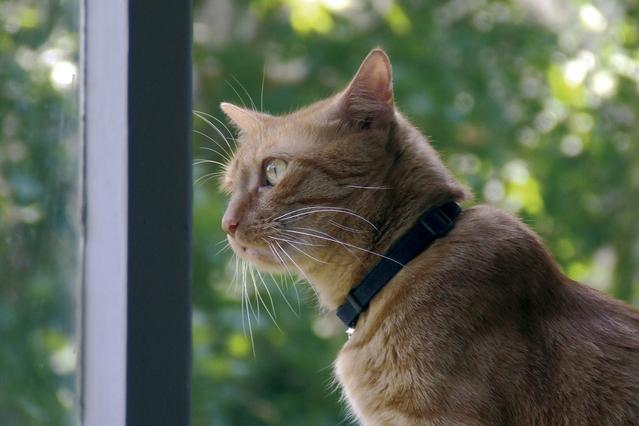 Кошка просит кота, что делать?