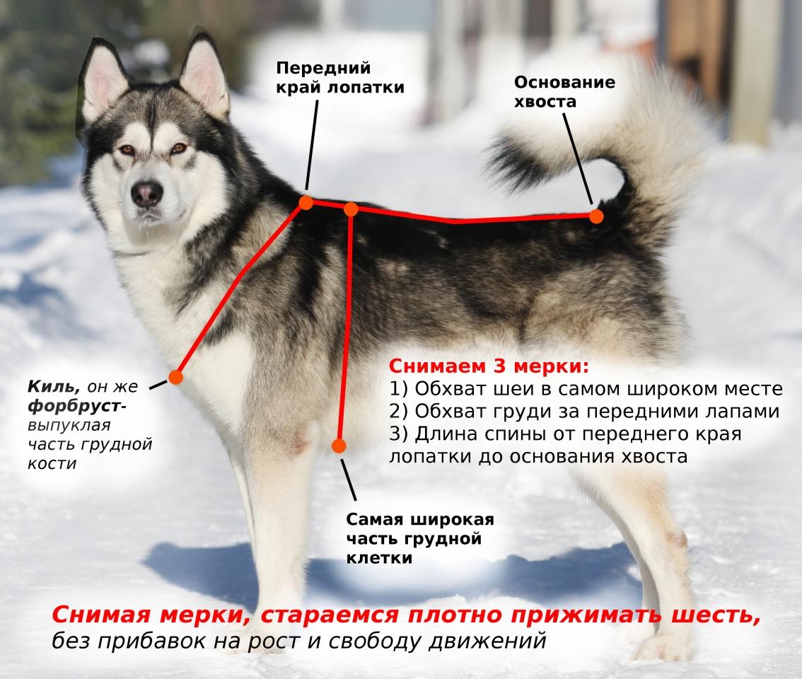 Как измерить собаку для шлейки - размеры шлеек для собак. 0a0c57601a7b4