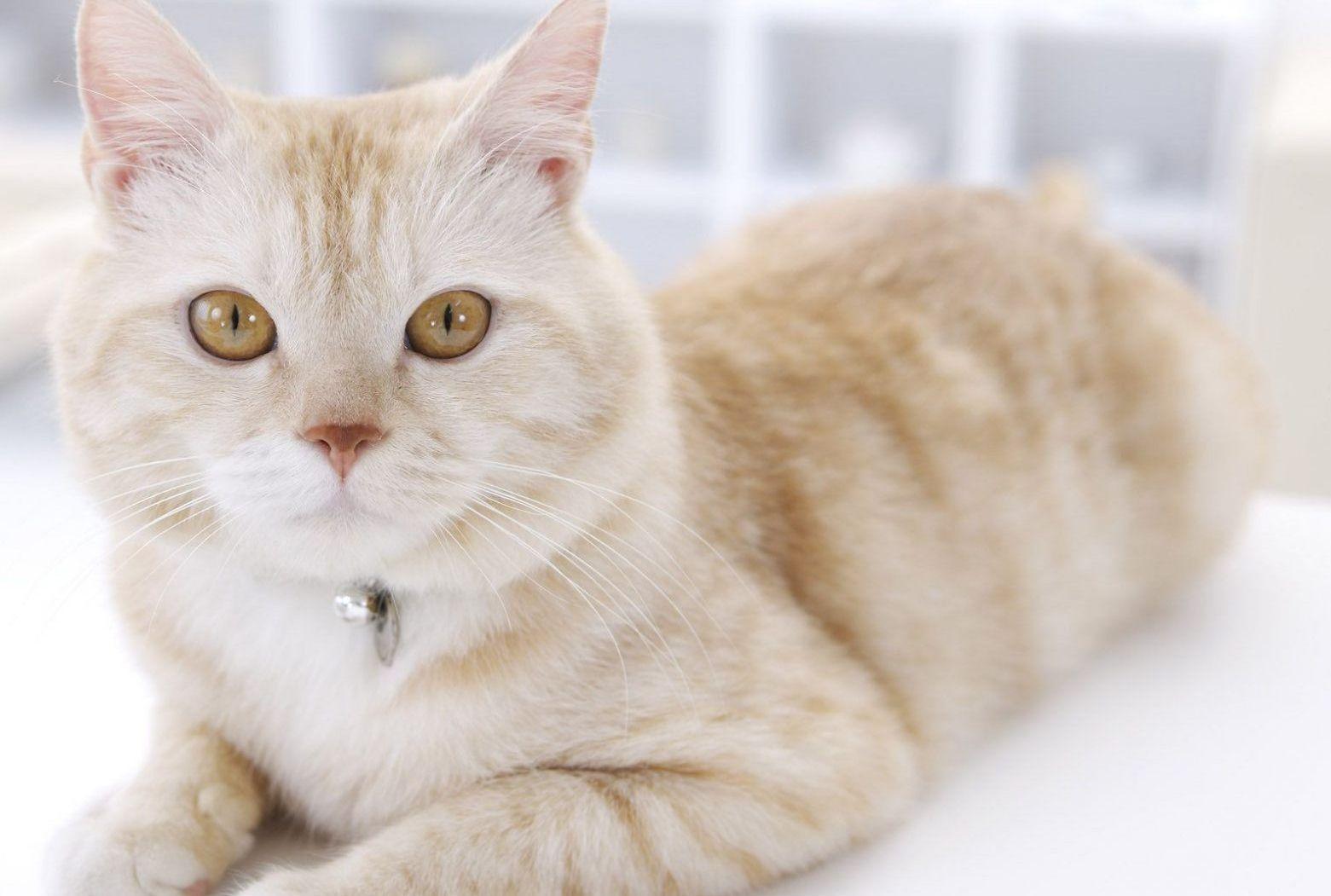 средства по уходу за кошками