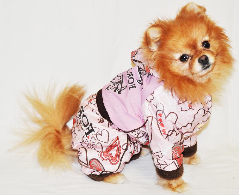 Фото Собаки в смешной одежде » ИнфоМир: новости