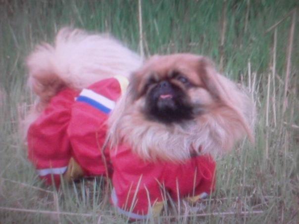 Одежда для собак челябинск недорого